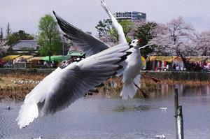 桜を背景に.jpg